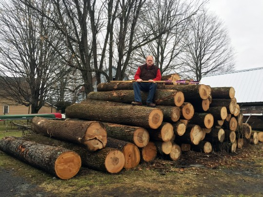 Ash and Cherry logs at Thunderbird Atlatl
